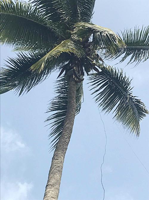 Kluk na palmě